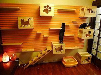 Aire de jeu du chat