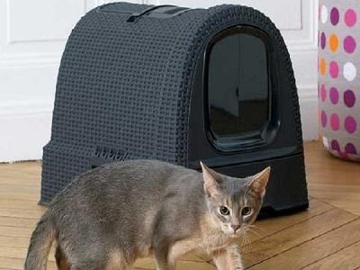 Aire propreté du chat