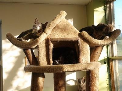 Aire de repos du chat
