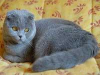 Robe chat couleur bleu