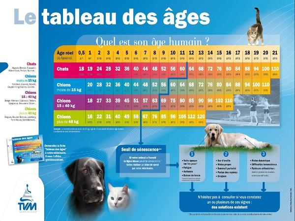 tableau de l'âge du chat