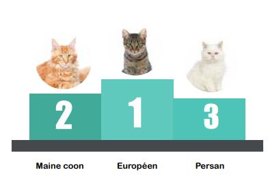 Top 3 des races de chats les plus identifiées en 2016