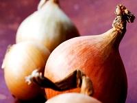 ail oignon aliment toxique