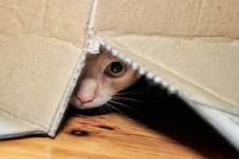 Le chat et les boîtes en carton