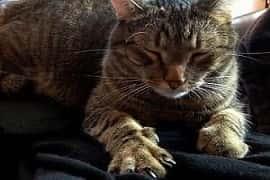 pourquoi le chat pétrit notre corps avec ses pattes