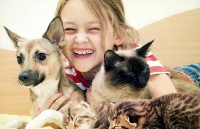 Les chats sont plus attachés aux humains qu'on ne le pense