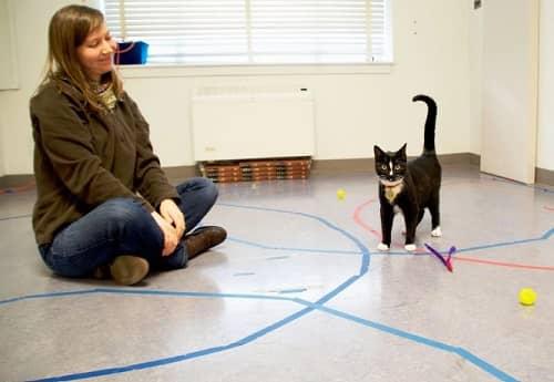 expérience sur le degré d'attachement des chats envers l'Homme