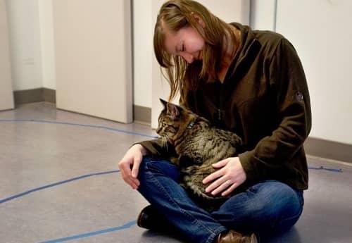 expérience sur le degré d'attachement des chats envers l'Homme 2