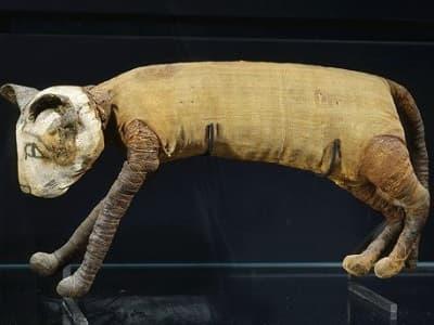 chat momifié en Égypte