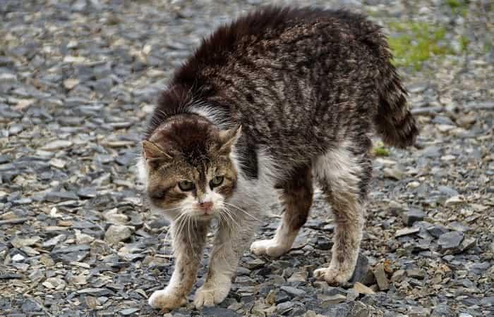 langage corporel - Les attitudes du chat