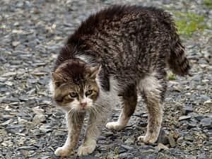 Les différentes attitudes du chat