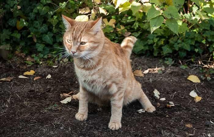 maladie - colite du chat