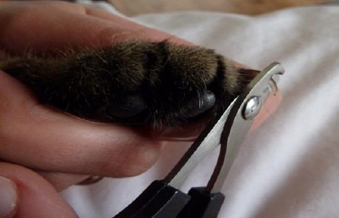 entretien - Couper les griffes du chat