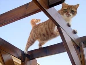 sens et réflexe - L'équilibre du chat