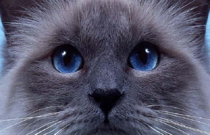 langage corporel - L'expression des yeux du chat