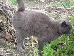 Langage corporel - Marquage du territoire du chat