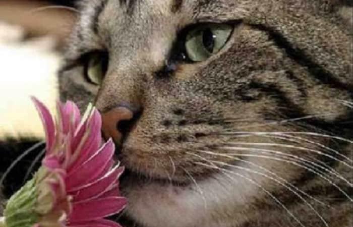 sens et réflexe - L'odorat du chat