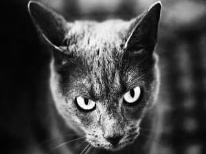 Sens et réflexe - L'ouïe du chat