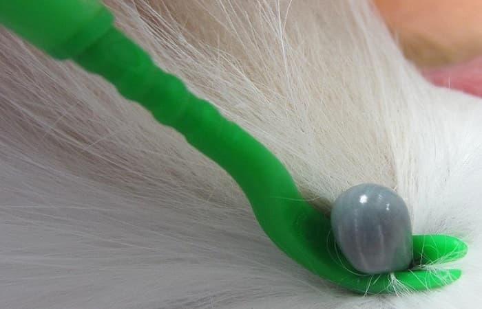 retirer une tique de son chat à l'aide d'un crochet