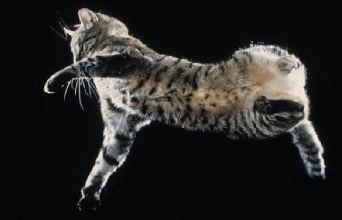 Sens et réflexes du chat