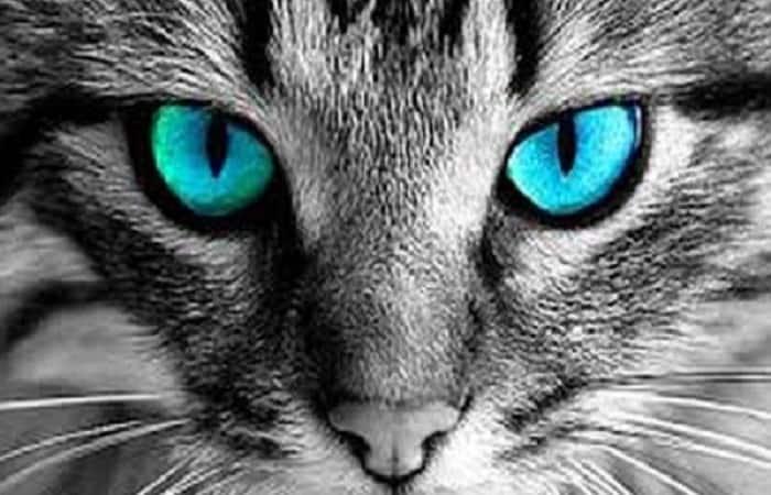 sens et réflexe - La vue du chat