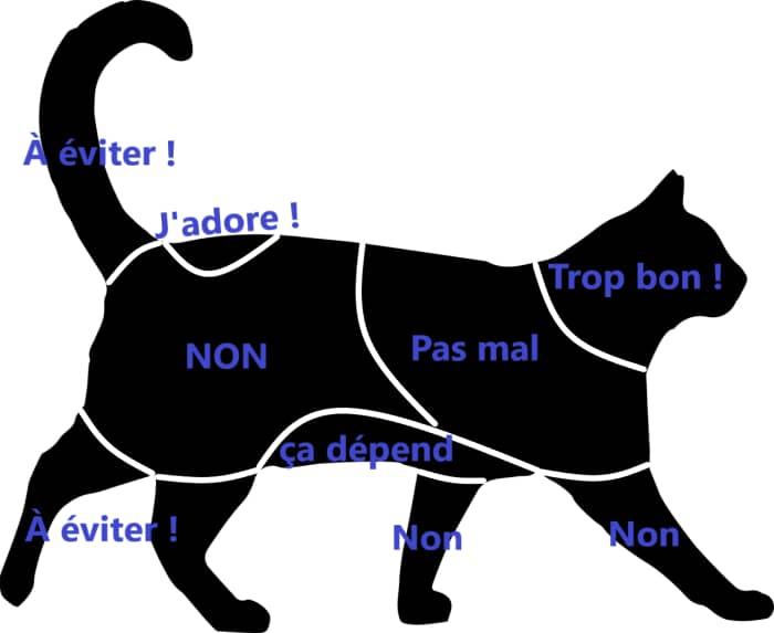 Différentes Zones de caresse à privilégier ou à éviter sur le corps du chat