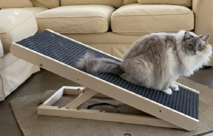 arthrite du chat - utilisation d'une rampe