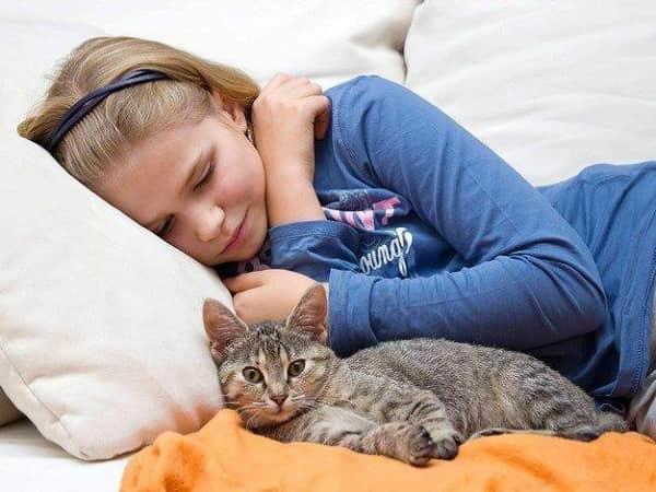 Pourquoi aiment-ils dormir avec nous?