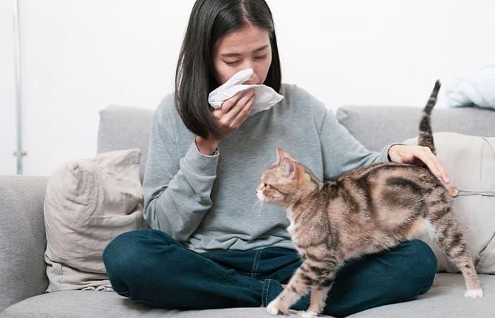 Races de chats hypoallergéniques