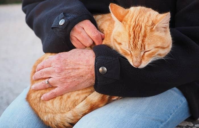 Comment bien caresser son chat ?