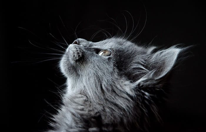 Les chats reconnaissent-ils leur nom ?